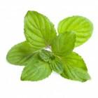 Menthe Verte 0 mg/l